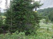絕境之旅:食物吊在樹上