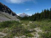絕境之旅:由Pinto lake爬上山,由這片森林出來