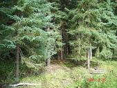 荒人的歲月:荒地的森林