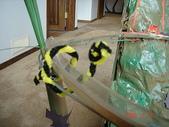 雲霄飛車:大蟒蛇