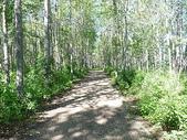 逐湖之旅:Pigeon Lake 湖濱森林步道