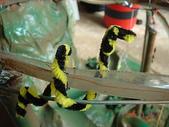 雲霄飛車:蟒蛇擋道