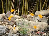 霞喀羅古道:古道上的野花