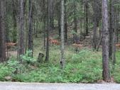 漂泊的木屋:CIMG1967.JPG