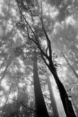 2011 水漾森林:1935360387.jpg