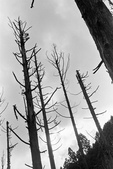 2011 水漾森林:1935360378.jpg