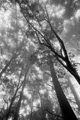 2011 水漾森林:1935360388.jpg
