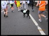 2009 富邦馬拉松 跑很大:1025313102.jpg