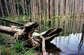 2011 水漾森林:1935360371.jpg