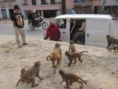 Nepal:1855865076.jpg