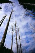 2011 水漾森林:1935360370.jpg
