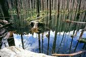 2011 水漾森林:1935360374.jpg