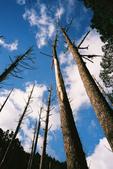 2011 水漾森林:1935360381.jpg