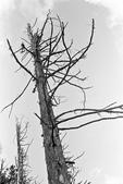 2011 水漾森林:1935360376.jpg