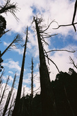 2011 水漾森林:1935360377.jpg