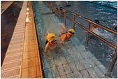 2014年暑假旅遊:松運水球大賽:松運水球大賽143.jpg