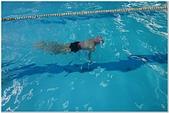 2014暑期泳訓:泳訓0818-14.jpg