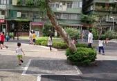 2018年暑期:羽球王+公園走一走:20180706羽球王_180707_0221.jpg