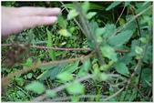 2014年暑期:幸福農莊奇遇記:好時節農莊-879.jpg