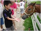 2014年暑期旅遊:富田花園農場:富田花園農場165.jpg