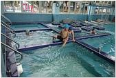 2014暑期泳訓:泳訓0818-10.jpg