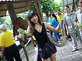 泰國之旅~PART 2:P1040720