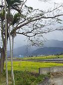 花東-縱谷花海之美:P1190743.JPG