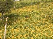 環島第二天-太麻里:IMGP2930
