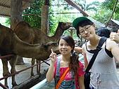 泰國之旅~PART 2:P1040732