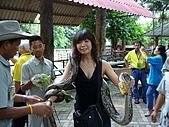 泰國之旅~PART 2:P1040716