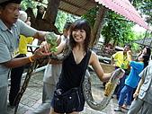 泰國之旅~PART 2:P1040717