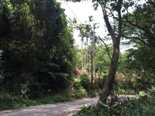 IMG_1668.JPG - 跑馬古道露營區/猴洞坑瀑布/大溪國小~