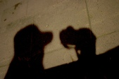 [11]0910半夜兩點35mm1.8 試拍:DSC_1224.JPG