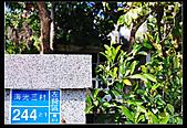 [2011]眷村文化館-廢墟禁止進入:DSC_0926.jpg