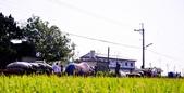 [11]0604嘉義板頭村(上):DSC_1081.jpg