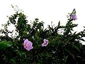 20080713 基隆嶼 登山:P1080887.JPG