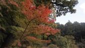 寂寞帶我去散步:成田公園