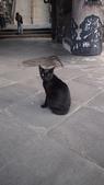 寂寞帶我去散步:神社的黑貓