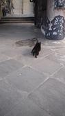 寂寞帶我去散步:黑貓發現鳥巢