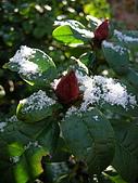 三月雪:ap_F23_20080320064332680.jpg