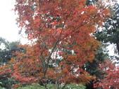 2011.11.18宜蘭遊 :SAM_0507.JPG