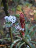 三月雪:ap_F23_20080320064420892.jpg