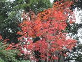 2011.11.18宜蘭遊 :SAM_0511.JPG