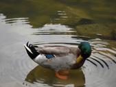 2011.11.18宜蘭遊 :SAM_0533.JPG