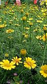植物寫真:P1000642