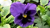 植物寫真:P1000660