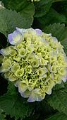 植物寫真:P1000643