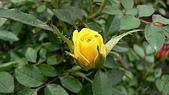 植物寫真:P1000646