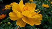植物寫真:P1000658