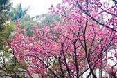 20150208_梅杜莎@台大校園外拍:_MG_3888.jpg